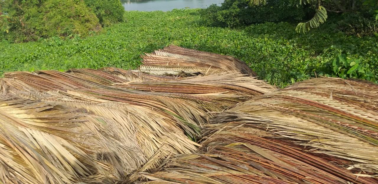 Lá dừa xé
